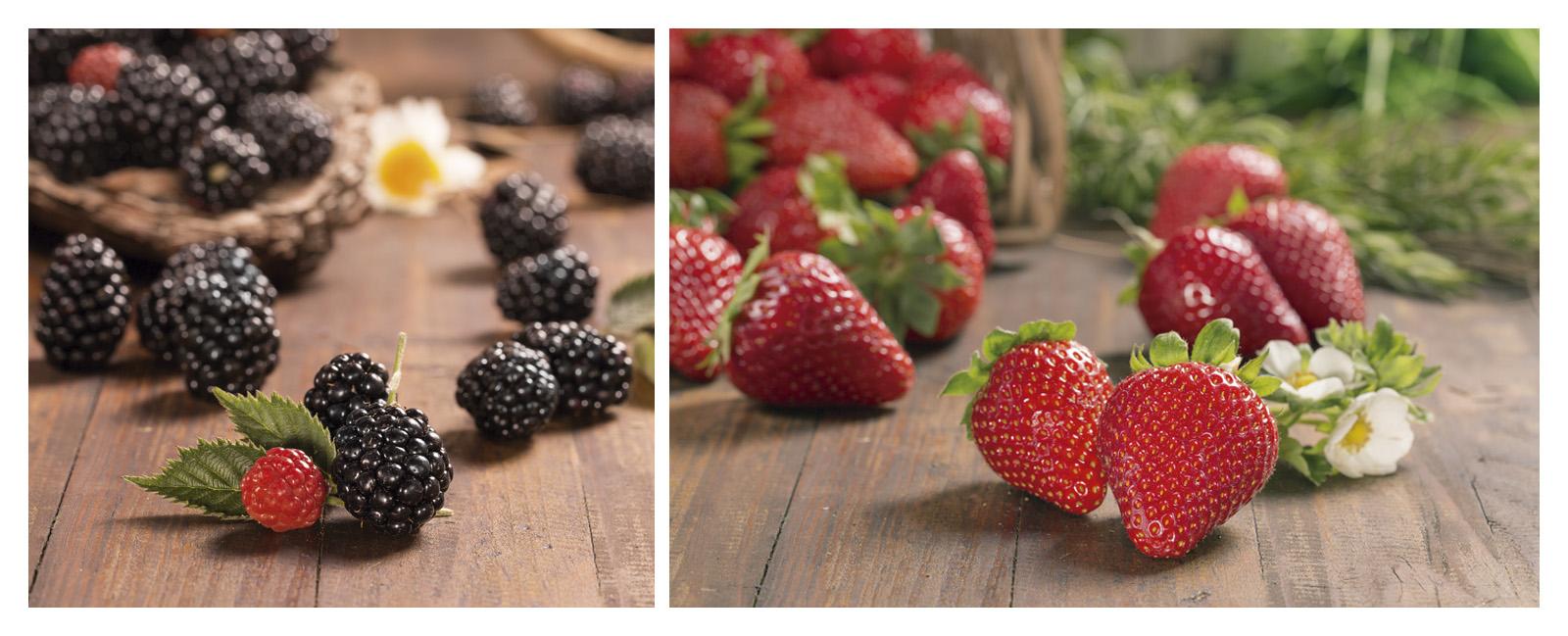 bionest-bodegones-frutos-rojos-rk-estudio